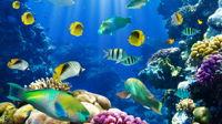 Мастер-класс по аквариумистике с Трубициным В.Ю.