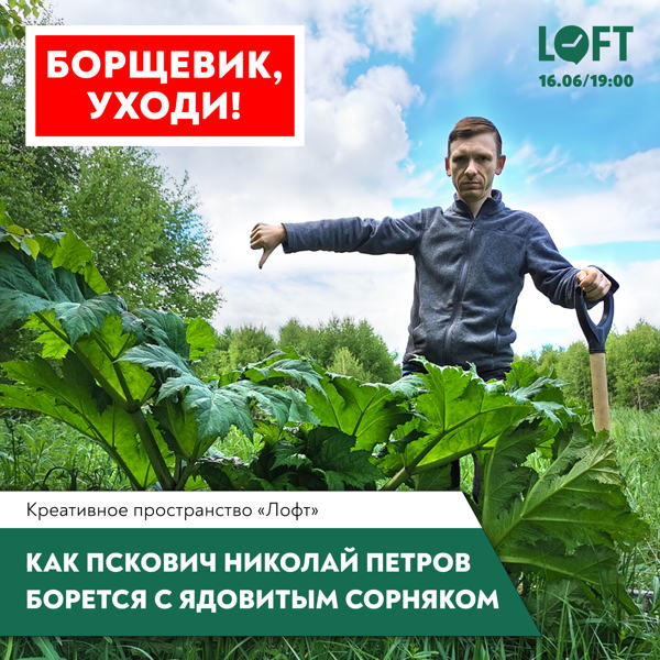 «Борщевик, уходи! или Как пскович Николай Петров борется с ядовитым сорняком»