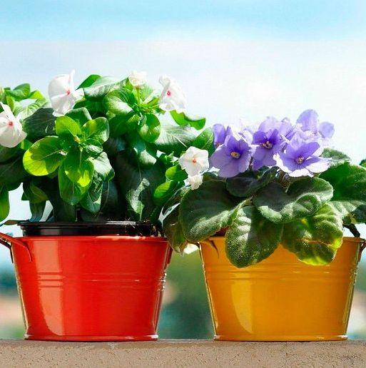 Фитодизайн: комнатное цветоводство